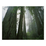 USA, California, Redwood National Park, 2 Poster