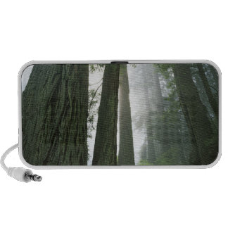 USA, California, Redwood National Park, 2 Notebook Speaker