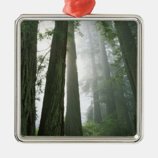 USA, California, Redwood National Park, Christmas Ornament