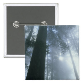 USA, California, Redwood National Park, Del 15 Cm Square Badge