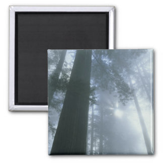 USA, California, Redwood National Park, Del Square Magnet
