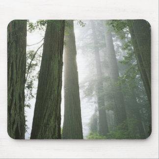 USA, California, Redwood National Park, Mouse Mat