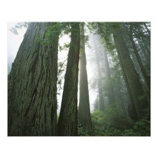 USA, California, Redwood National Park, Photo Art