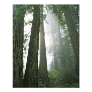 USA, California, Redwood National Park, Photo Print