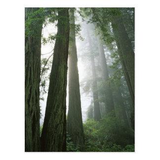 USA, California, Redwood National Park, Postcard