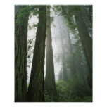 USA, California, Redwood National Park, Poster