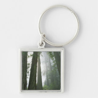 USA, California, Redwood National Park, Silver-Colored Square Key Ring