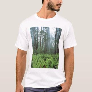 USA, California, Redwood NP. Ferns and T-Shirt