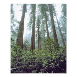 USA California Redwood NP Fog filters the Photo