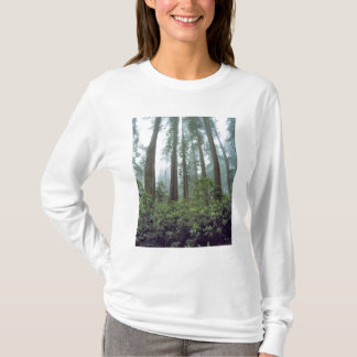 USA, California, Redwood NP. Fog filters the T-Shirt