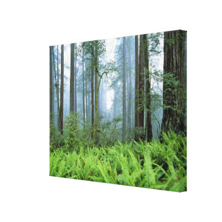 USA, California, Redwood NP. Redwood trees Canvas Print