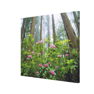 USA, California, Redwood NP. Rhododendron Canvas Print