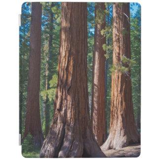 USA, California. Redwood Tree Trunks, Mariposa iPad Cover
