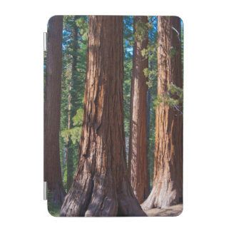USA, California. Redwood Tree Trunks, Mariposa iPad Mini Cover