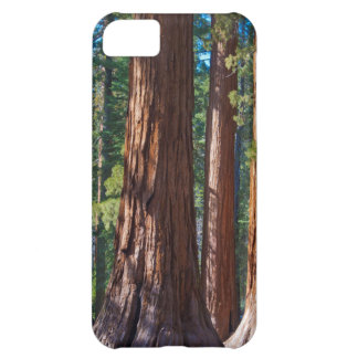 USA, California. Redwood Tree Trunks, Mariposa iPhone 5C Case
