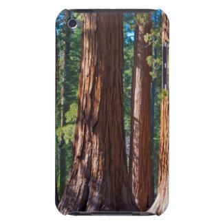 USA, California. Redwood Tree Trunks, Mariposa iPod Touch Case