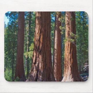 USA, California. Redwood Tree Trunks, Mariposa Mouse Mat