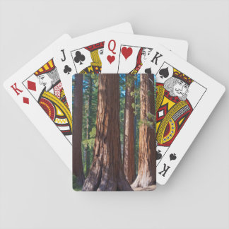 USA, California. Redwood Tree Trunks, Mariposa Playing Cards