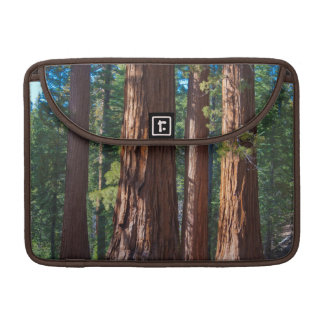 USA, California. Redwood Tree Trunks, Mariposa Sleeve For MacBook Pro