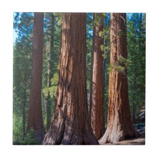 USA, California. Redwood Tree Trunks, Mariposa Tile