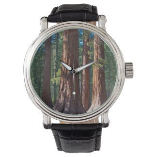 USA, California. Redwood Tree Trunks, Mariposa Watch