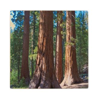 USA, California. Redwood Tree Trunks, Mariposa Wood Coaster