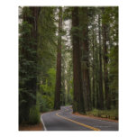 USA, California, road through Redwood forest 2 Poster