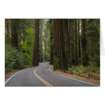 USA, California, road through Redwood forest Greeting Card