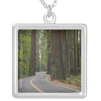 USA, California, road through Redwood forest Necklaces