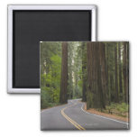 USA, California, road through Redwood forest Square Magnet