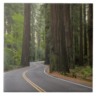 USA, California, road through Redwood forest Tile