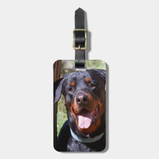 USA, California. Rottweiler By A Tree Luggage Tag