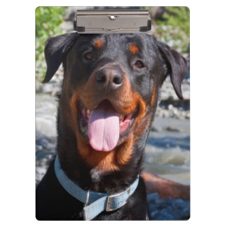 USA, California. Rottweiler Smiling Clipboard