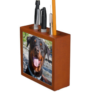 USA, California. Rottweiler Smiling Desk Organiser