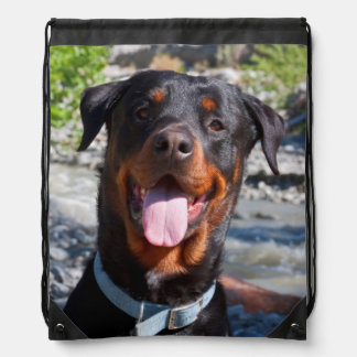 USA, California. Rottweiler Smiling Drawstring Bag