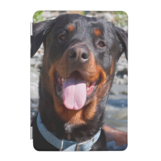 USA, California. Rottweiler Smiling iPad Mini Cover