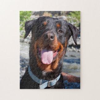 USA, California. Rottweiler Smiling Jigsaw Puzzle