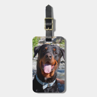 USA, California. Rottweiler Smiling Luggage Tag