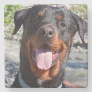 USA, California. Rottweiler Smiling Stone Coaster