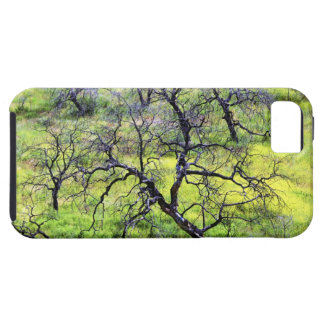 USA, California, San Diego. A burnt oak forest Case For The iPhone 5