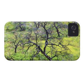 USA, California, San Diego. A burnt oak forest Case-Mate iPhone 4 Case