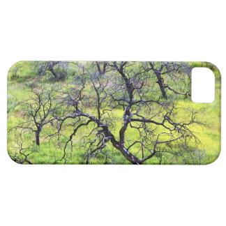 USA, California, San Diego. A burnt oak forest iPhone 5 Case