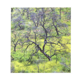 USA, California, San Diego. A burnt oak forest Notepad