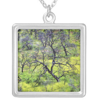 USA, California, San Diego. A burnt oak forest Silver Plated Necklace