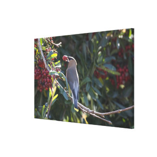 USA - California - San Diego - Cedar Waxwing Canvas Print