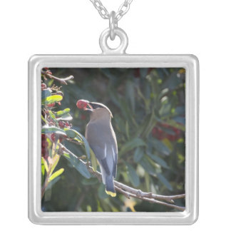 USA - California - San Diego - Cedar Waxwing Silver Plated Necklace