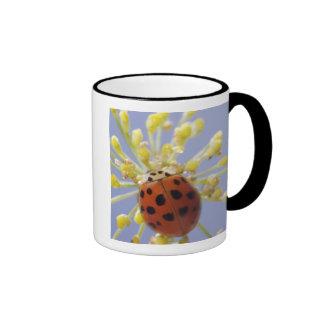 USA, California, San Diego, Close-up of a lady Ringer Coffee Mug