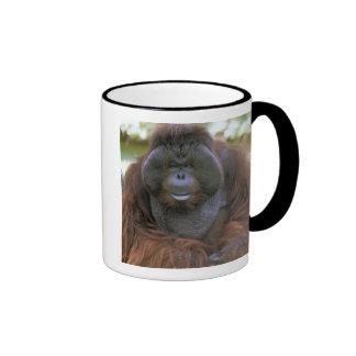 USA, California, San Diego Zoo. Captive Mug