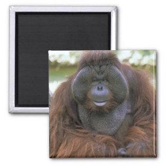USA, California, San Diego Zoo. Captive Square Magnet