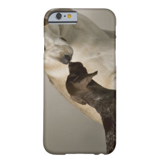 USA, California, San Francisco Barely There iPhone 6 Case